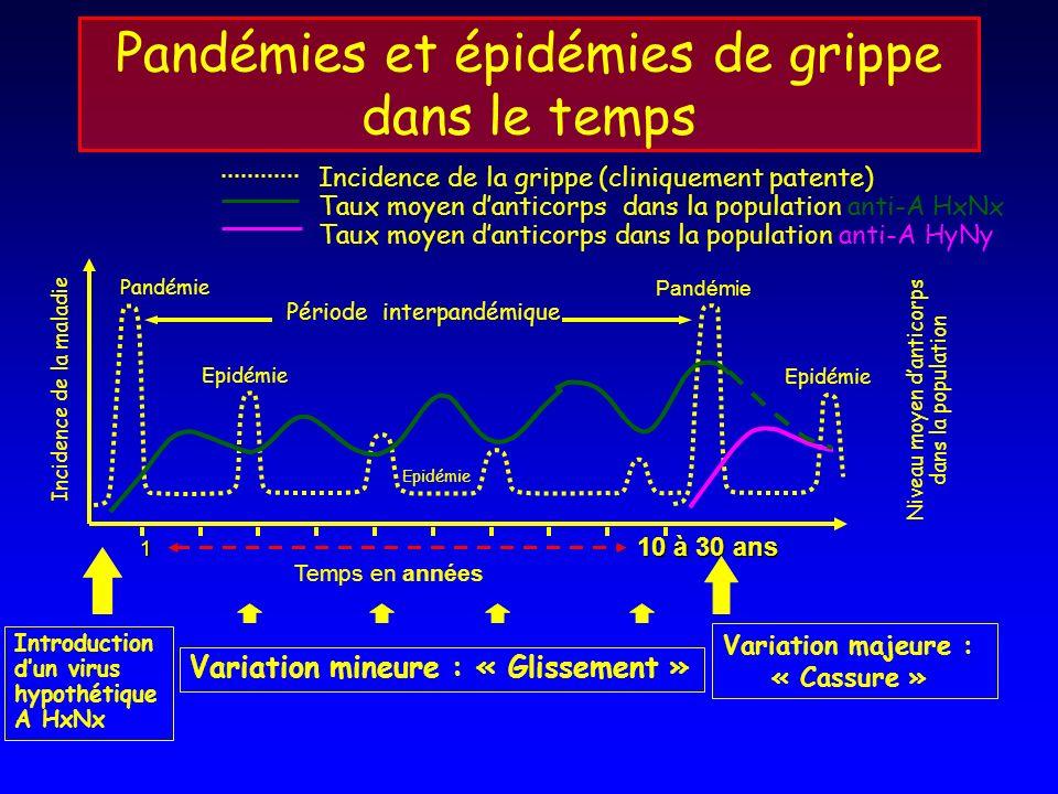 Pandémies et épidémies de grippe dans le temps Incidence de la maladie Niveau moyen danticorps dans la population Pandémie Epidémie Pandémie Période i