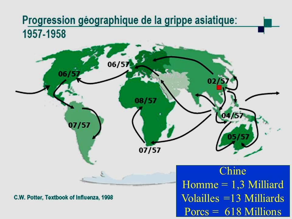 Chine Homme = 1,3 Milliard Volailles =13 Milliards Porcs = 618 Millions