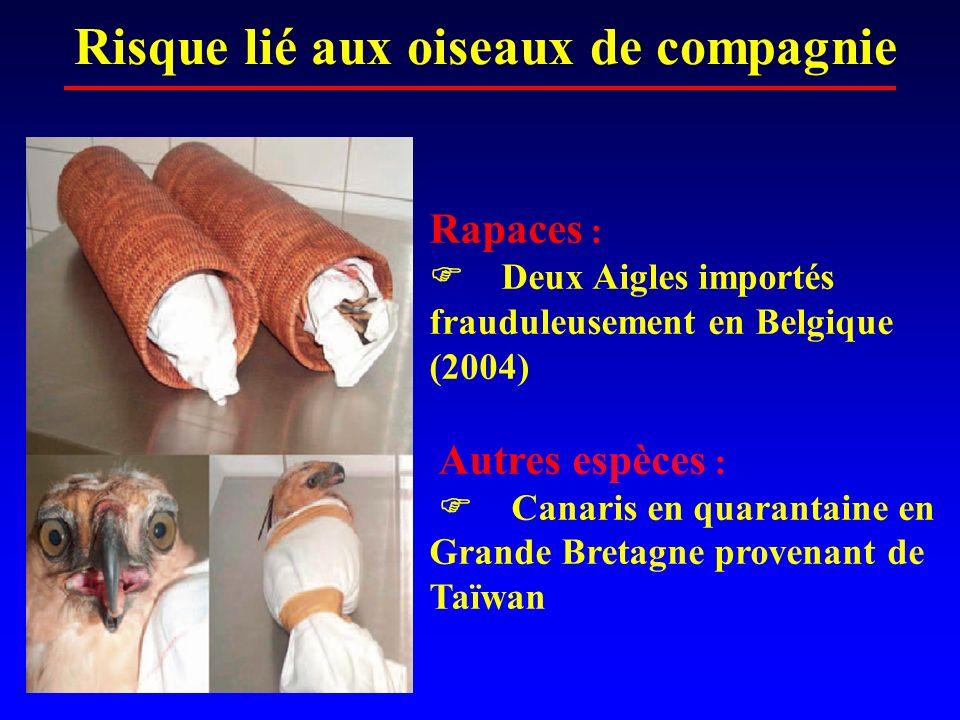 Risque lié aux oiseaux de compagnie Rapaces : Deux Aigles importés frauduleusement en Belgique (2004) Autres espèces : Canaris en quarantaine en Grand