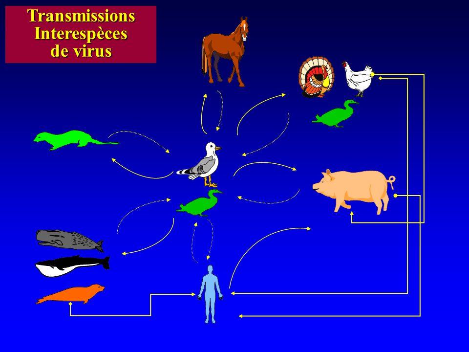 GRIPPE AVIAIRE Barriere d Especes OISEAU HOMME H4 H9 H1 H3 H5 +++ H5 = Pathogène ++ H7 + H7 = +/- Plusieurs H5N1 Virulence variable