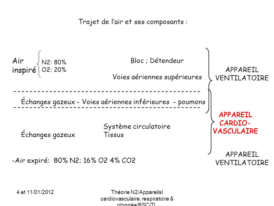 Deux phases : => Phase alvéolaire : Se charge en O2 et de décharge en CO2 => Phase tissulaire : Se charge en CO2 et de décharge en O2 Cest le sang qui joue le rôle de transporteur entre les deux phases via le mécanisme de diffusion (transfert par différence de pression partielle) Sang chargé en CO2 POUMON 16% O2 4%CO2 80% N2 20% O2 0%CO2 80% N2 TISSU CO2 N2 O2 N2 PHASE TISSULAIRE 16% O2 4%CO2 80% N2 Sang chargé en O2 Sang chargé en CO2 O2 N2 CO2 N2 PHASE ALVEOLAIRE Les échanges gazeux 1/3 4 et 11/01/2012Théorie N2/Appareilsl cardiovasculaire, respiratoire & plongée/BSC/TL