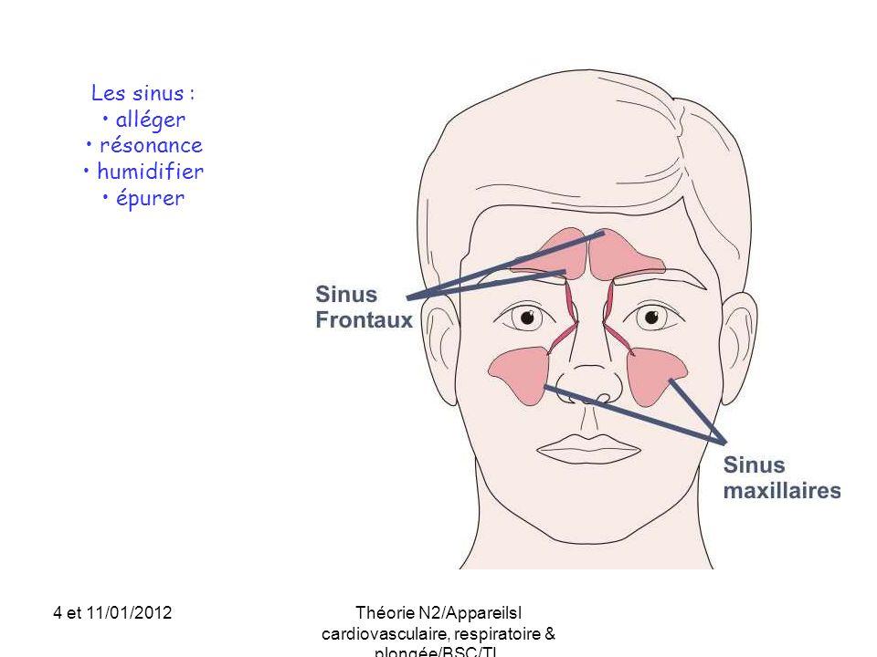 Les sinus : alléger résonance humidifier épurer 4 et 11/01/2012Théorie N2/Appareilsl cardiovasculaire, respiratoire & plongée/BSC/TL