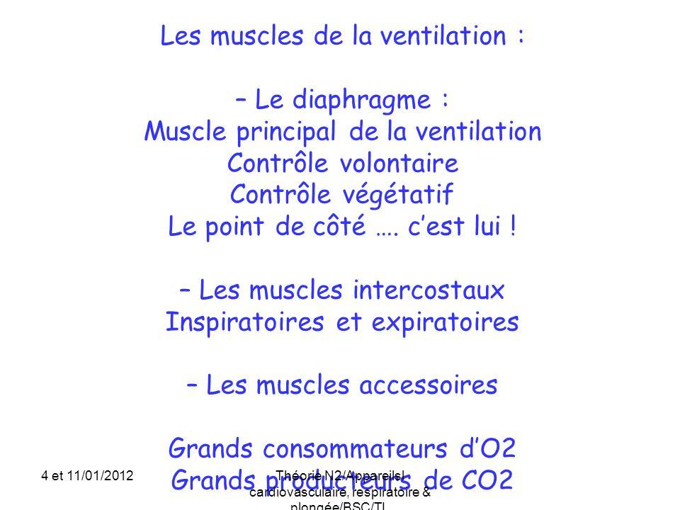 Les muscles de la ventilation : – Le diaphragme : Muscle principal de la ventilation Contrôle volontaire Contrôle végétatif Le point de côté …. cest l