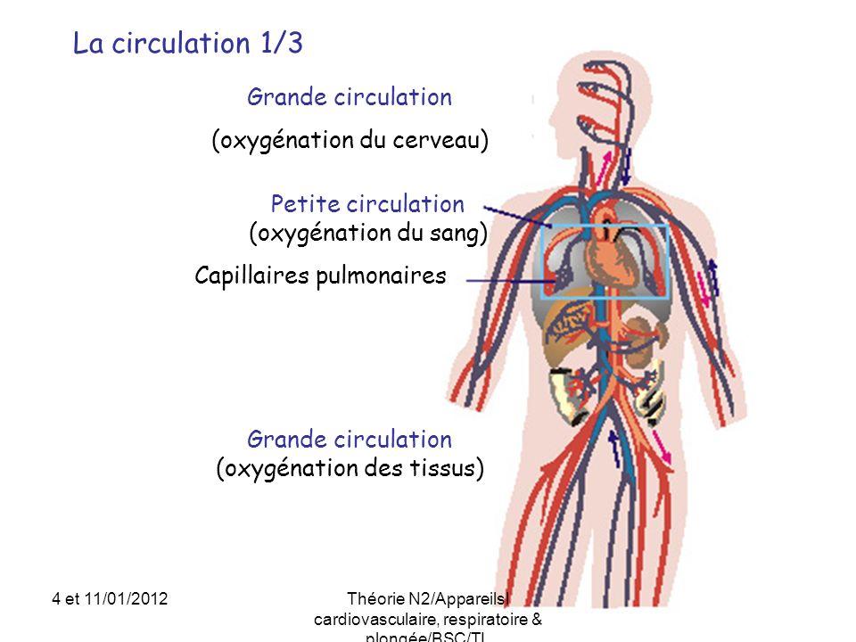 La circulation 1/3 Petite circulation (oxygénation du sang) Capillaires pulmonaires Grande circulation (oxygénation des tissus) Grande circulation (ox