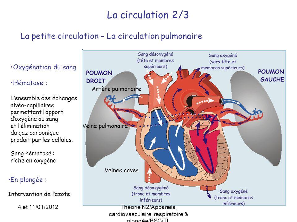 Le cœur – Physiologie et fonctionnement 1/3 La révolution cardiaque mouvement cyclique en 3 temps: - Systole auriculaire: contraction des 2 oreillettes - Systole ventriculaire: contraction des 2 ventricules - Diastole: temps de repos 60% 1 - remplissage des oreillettes : veines caves & pulmonaire (diastole) 2 - contraction des oreillettes (systole auriculaire) ouverture des valvules auriculo-ventriculaires remplissage des ventricules 3 - contraction des ventricules (systole ventriculaire) ouverture des valvules semi-lunaires éjection dans les artères (aorte) (diastole) 4 et 11/01/2012Théorie N2/Appareilsl cardiovasculaire, respiratoire & plongée/BSC/TL
