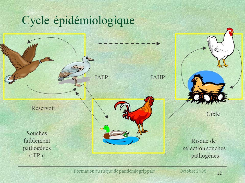 12 Formation au risque de pandémie grippale Octobre 2006 Cycle épidémiologique IAFP Risque de sélection souches pathogènes Souches faiblement pathogèn