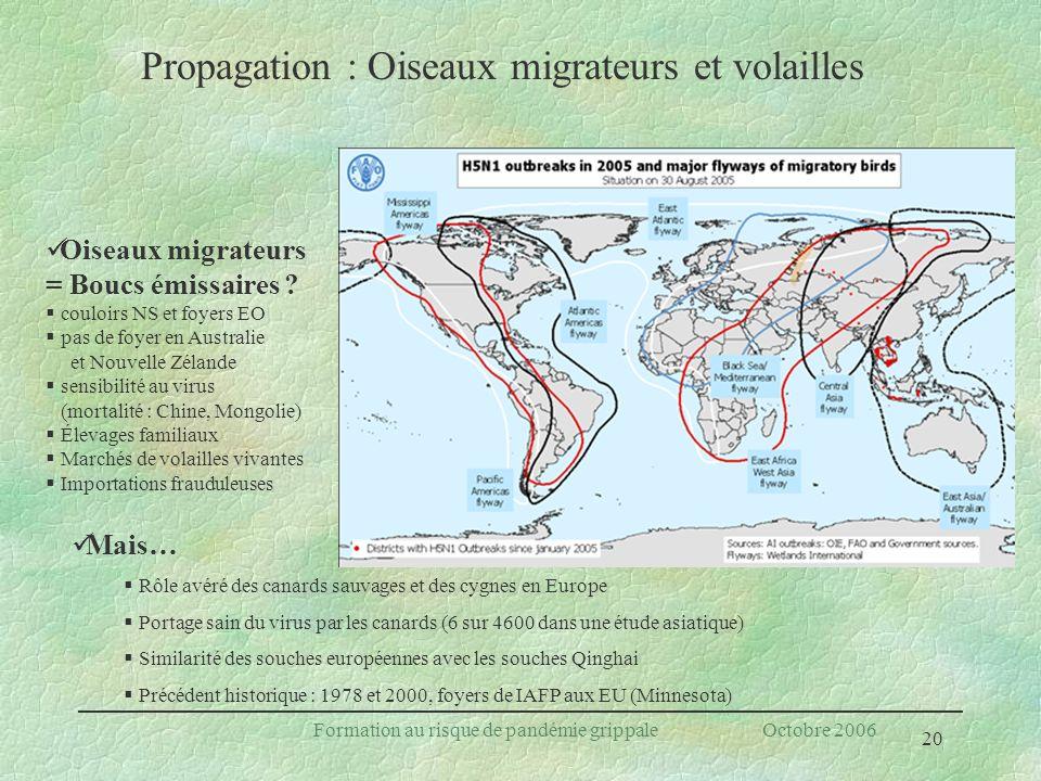 20 Formation au risque de pandémie grippale Octobre 2006 Propagation : Oiseaux migrateurs et volailles Oiseaux migrateurs = Boucs émissaires ? couloir