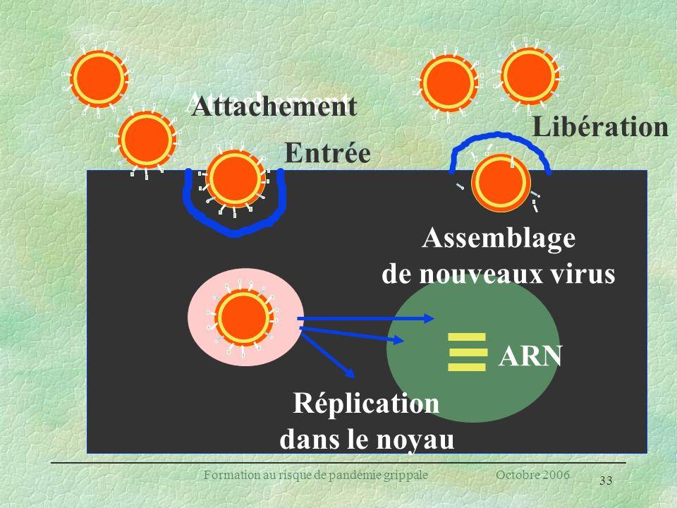 33 Formation au risque de pandémie grippale Octobre 2006 Entrée Réplication dans le noyau Assemblage de nouveaux virus Libération Attachement ARN Atta
