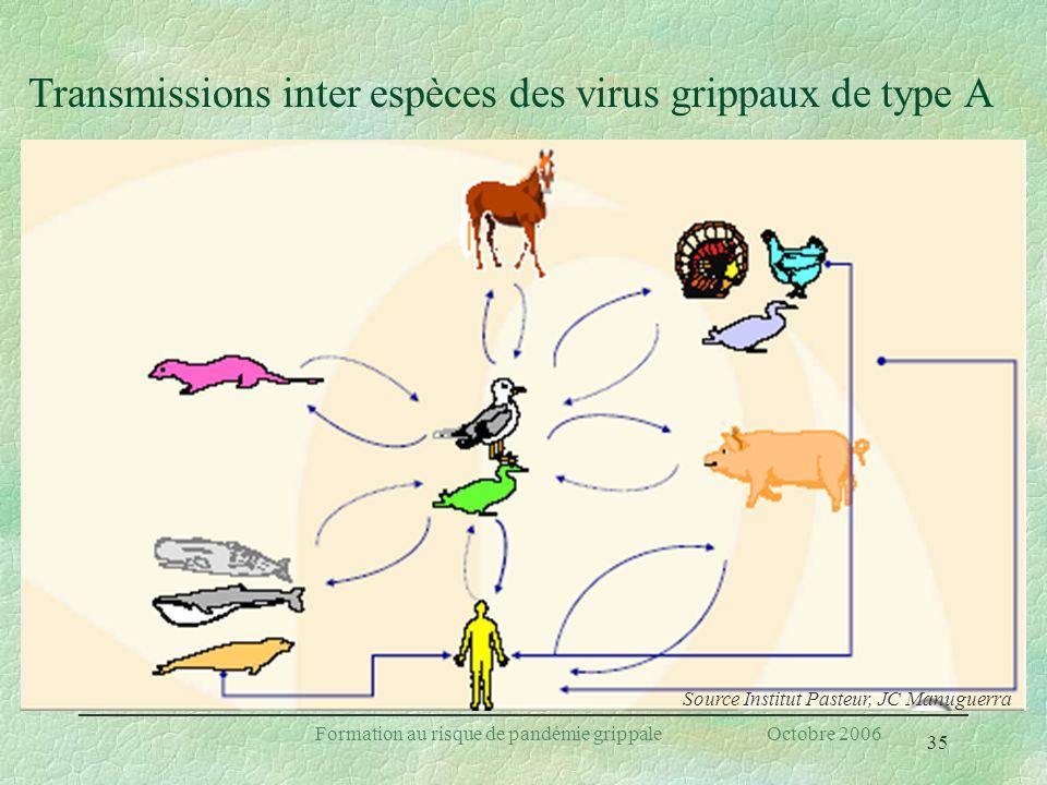 35 Formation au risque de pandémie grippale Octobre 2006 Transmissions inter espèces des virus grippaux de type A Source Institut Pasteur, JC Manuguer