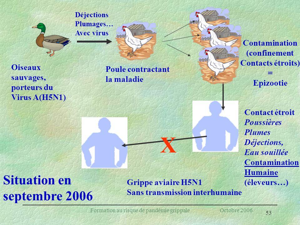 53 Formation au risque de pandémie grippale Octobre 2006 Oiseaux sauvages, porteurs du Virus A(H5N1) Déjections Plumages… Avec virus Poule contractant