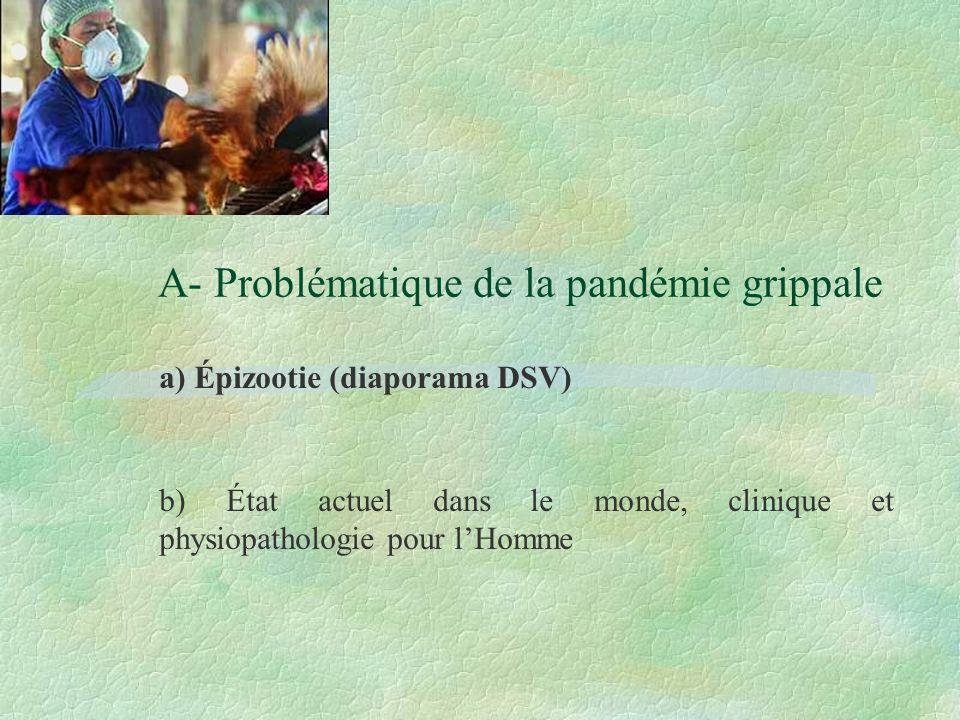 A- Problématique de la pandémie grippale a) Épizootie (diaporama DSV) b) État actuel dans le monde, clinique et physiopathologie pour lHomme