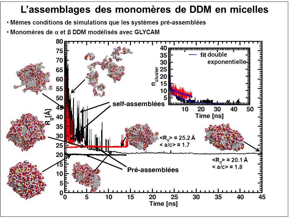 Lassemblages des monomères de DDM en micelles Mêmes conditions de simulations que les systèmes pré-assemblées Monomères de et β DDM modélisés avec GLY