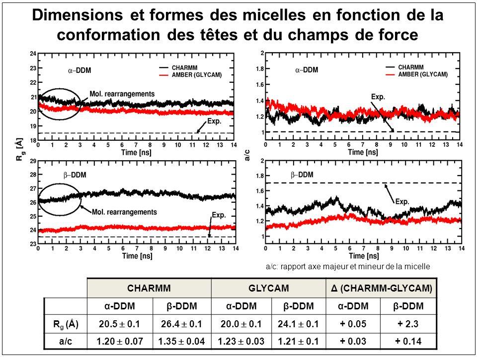 CHARMMGLYCAMΔ (CHARMM-GLYCAM) α-DDMβ-DDMα-DDMβ-DDMα-DDMβ-DDM ASA DDM (Å 2 ) 259.0 5.2251.8 7.6209.0 5.7194.9 3.6 + 50.0+56.9 f Tail (%) 11.0 0.210.0 0.3 9.8 0.39.3 0.2 + 1.2+ 0.7 A h v (Å 2 ) 231.4 3.9226.2 3.9189.2 4.0176.6 3.5 +42.2+ 49.6 A h (Å 2 ) 71.7 0.766.2 0.466.8 0.655.5 0.3 + 4.9+ 10.7 A h rg (exp) ( -DDM) = 58 Å 2 et ( -DDM) = 52 Å 2 Dupuy et al.