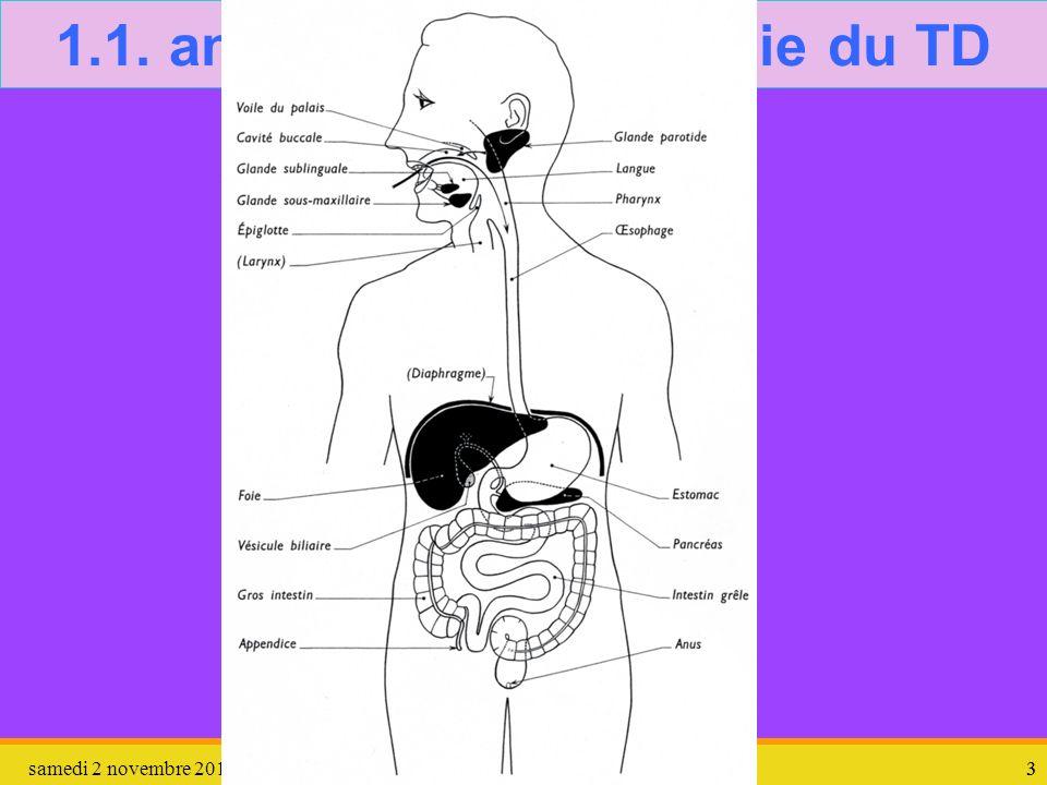 samedi 2 novembre 201333 1.1. anatomie – physiologie du TD