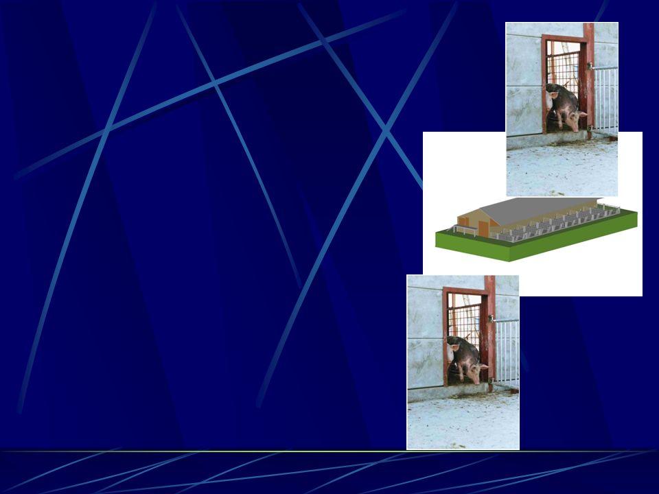 Ventilation : - Bâtiment grand volume - Faîtière ouverte - Bardage - Accès extérieurs