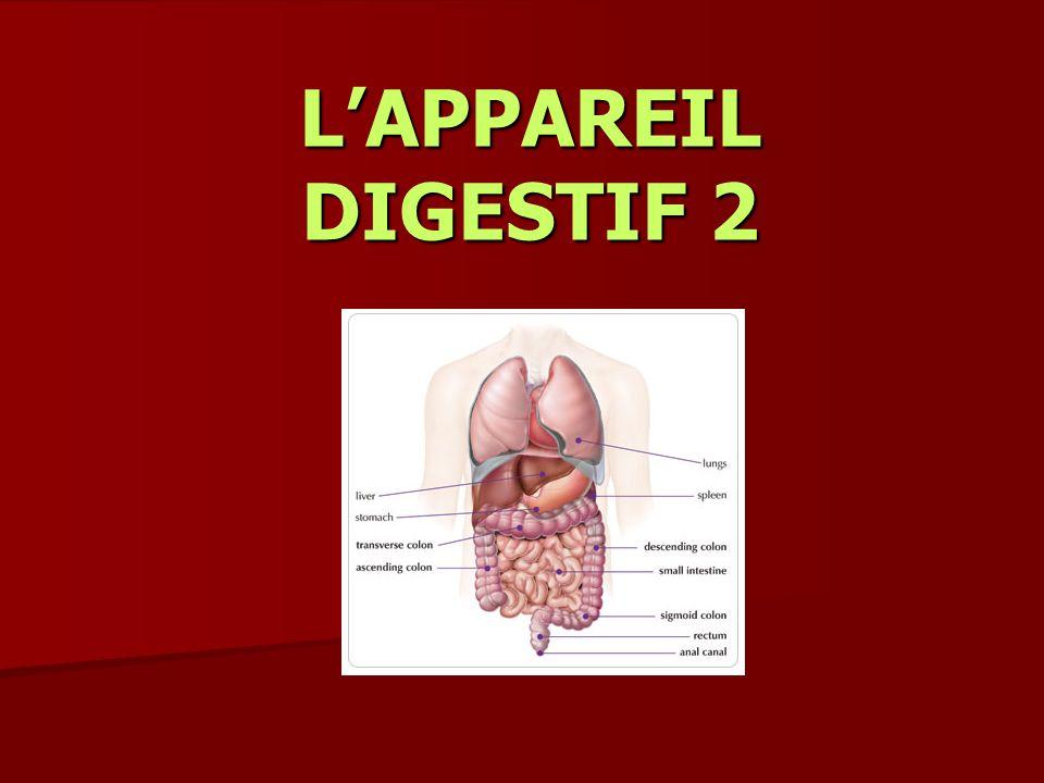 LAPPAREIL DIGESTIF 2