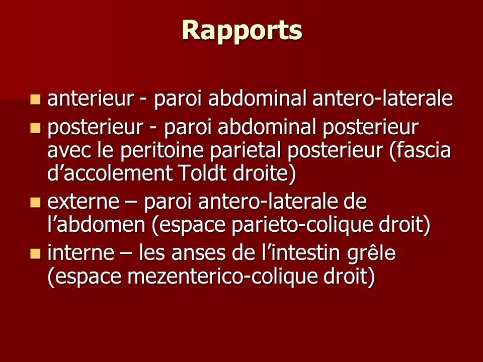 Rapports anterieur - paroi abdominal antero-laterale anterieur - paroi abdominal antero-laterale posterieur - paroi abdominal posterieur avec le perit
