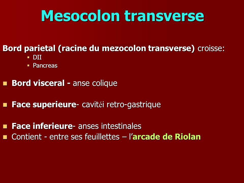Mesocolon transverse Bord parietal (racine du mezocolon transverse) croisse: DII DII Pancreas Pancreas Bord visceral - anse colique Bord visceral - an