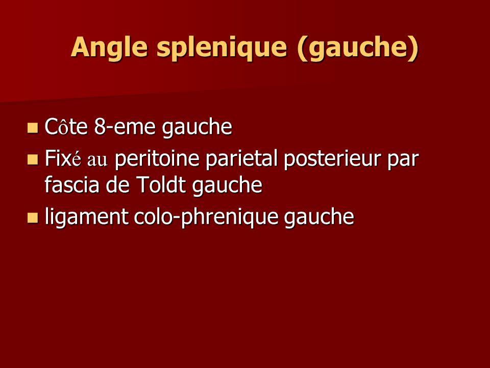 Angle splenique (gauche) C ô te 8-eme gauche C ô te 8-eme gauche Fix é au peritoine parietal posterieur par fascia de Toldt gauche Fix é au peritoine