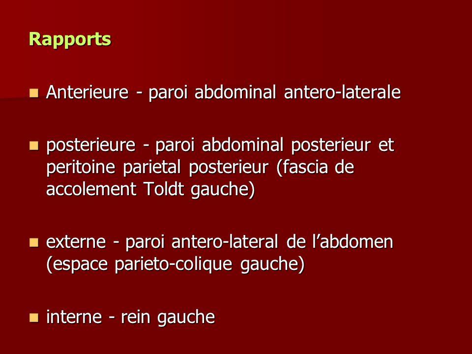 Rapports Anterieure - paroi abdominal antero-laterale Anterieure - paroi abdominal antero-laterale posterieure - paroi abdominal posterieur et peritoi