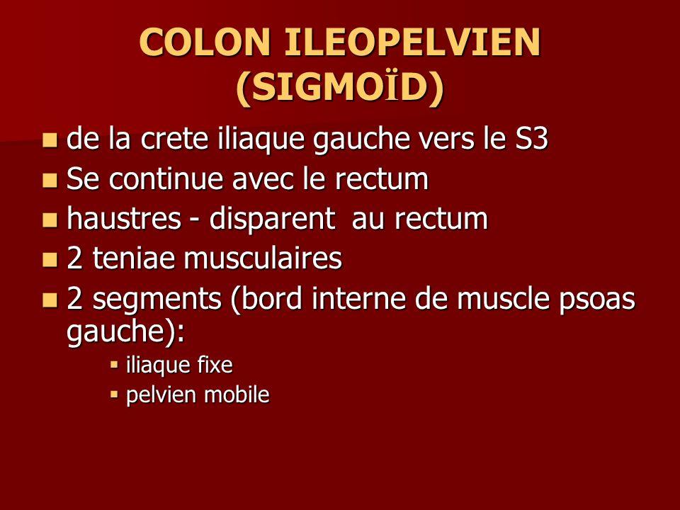 COLON ILEOPELVIEN (SIGMO Ï D) de la crete iliaque gauche vers le S3 de la crete iliaque gauche vers le S3 Se continue avec le rectum Se continue avec