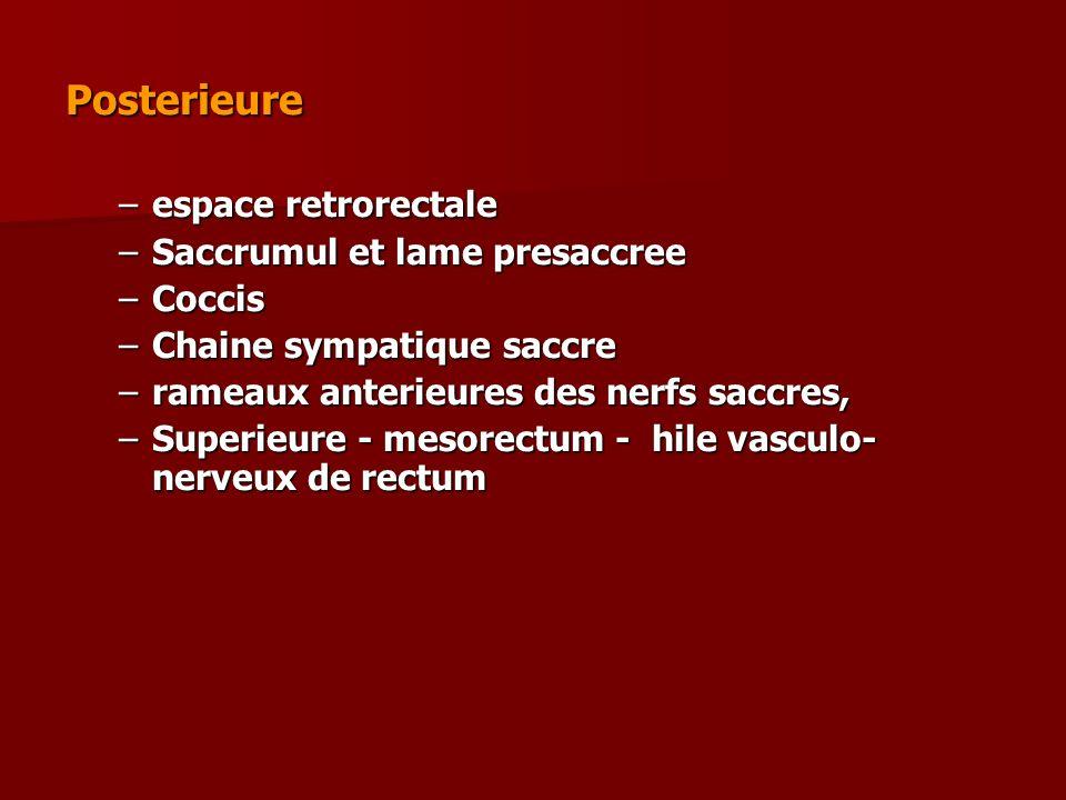 Posterieure –espace retrorectale –Saccrumul et lame presaccree –Coccis –Chaine sympatique saccre –rameaux anterieures des nerfs saccres, –Superieure -