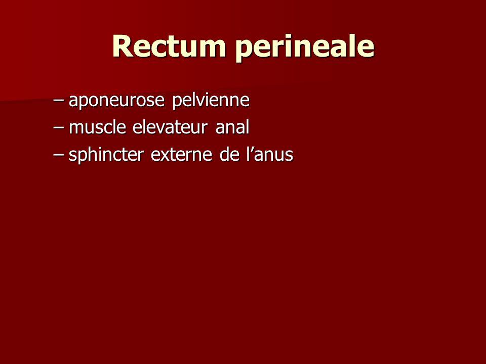 Rectum perineale –aponeurose pelvienne –muscle elevateur anal –sphincter externe de lanus