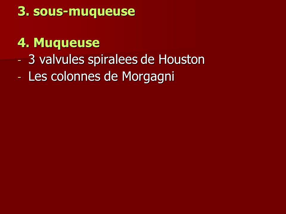 3. sous-muqueuse 4. Muqueuse - 3 valvules spiralees de Houston - Les colonnes de Morgagni