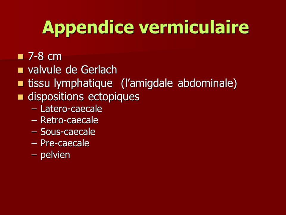 Appendice vermiculaire Appendice vermiculaire 7-8 cm 7-8 cm valvule de Gerlach valvule de Gerlach tissu lymphatique (lamigdale abdominale) tissu lymph
