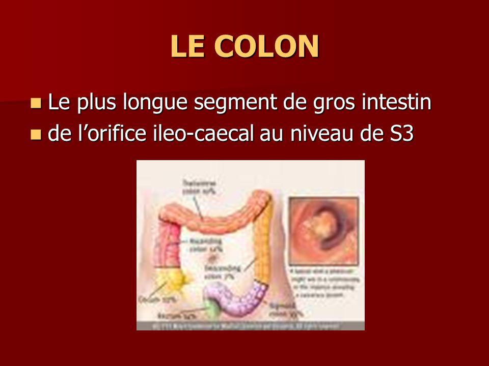 COLON ASCENDANT segment fixe segment fixe entre le caecum et langle droit ou hepatique de colon (c ô te 10-eme droite) entre le caecum et langle droit ou hepatique de colon (c ô te 10-eme droite) 8-15 cm 8-15 cm orifice ileo-caecal a une valvule ileo- caecale de Bauhin orifice ileo-caecal a une valvule ileo- caecale de Bauhin
