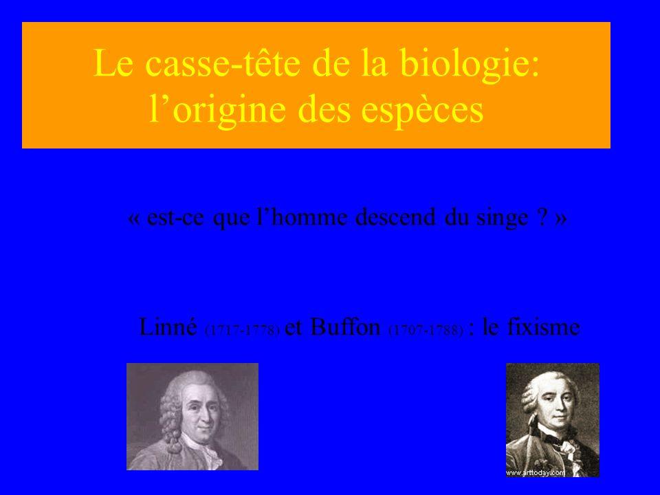 Le casse-tête de la biologie: lorigine des espèces « est-ce que lhomme descend du singe ? » Linné (1717-1778) et Buffon (1707-1788) : le fixisme
