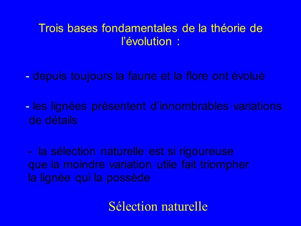Trois bases fondamentales de la théorie de lévolution : - la sélection naturelle est si rigoureuse que la moindre variation utile fait triompher la li