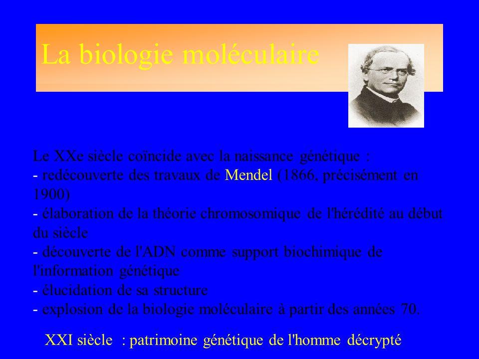 La biologie moléculaire Le XXe siècle coïncide avec la naissance génétique : - redécouverte des travaux de Mendel (1866, précisément en 1900) - élabor