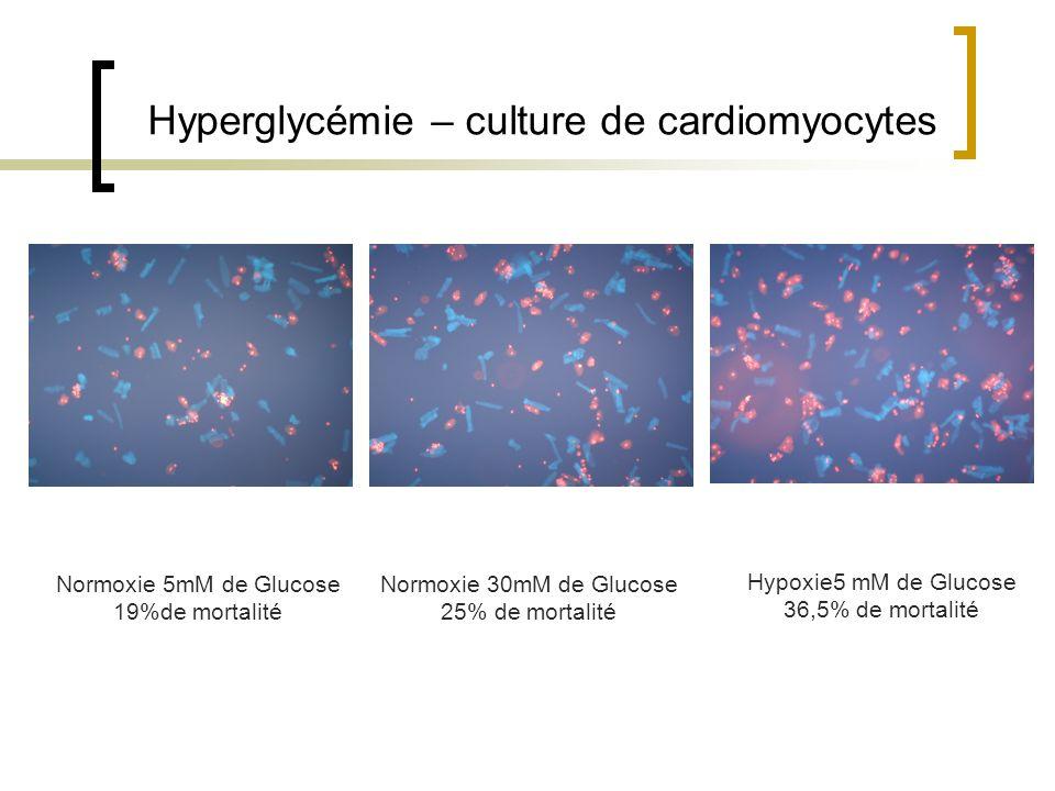 Hyperglycémie – culture de cardiomyocytes Normoxie 5mM de Glucose 19%de mortalité Normoxie 30mM de Glucose 25% de mortalité Hypoxie5 mM de Glucose 36,