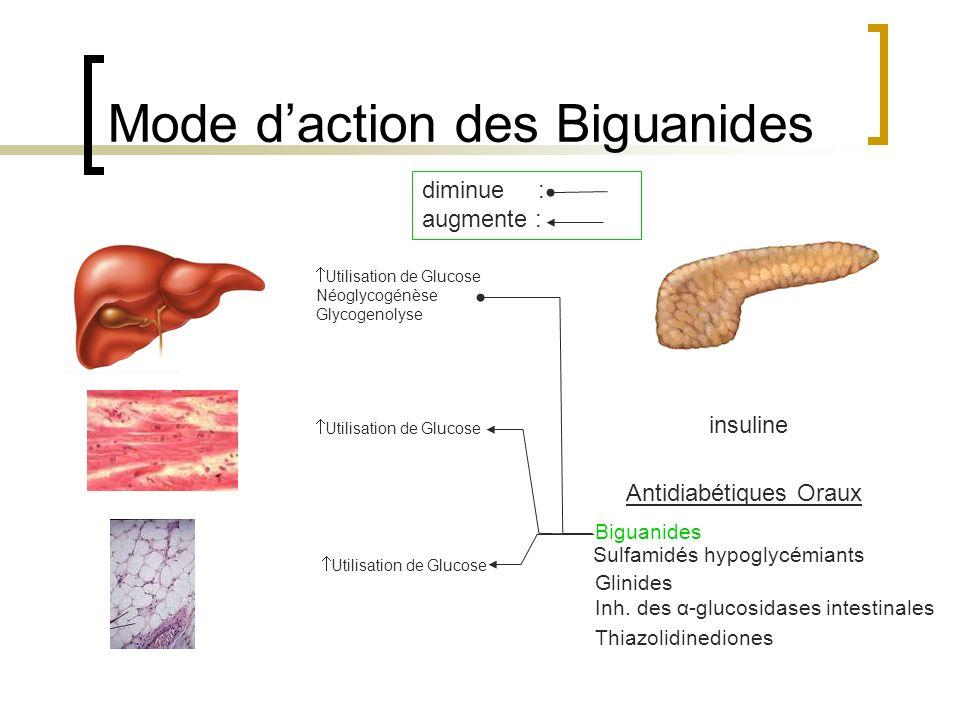 Utilisation de Glucose Néoglycogénèse Glycogenolyse Utilisation de Glucose insuline Mode daction des Biguanides Antidiabétiques Oraux Biguanides Sulfa