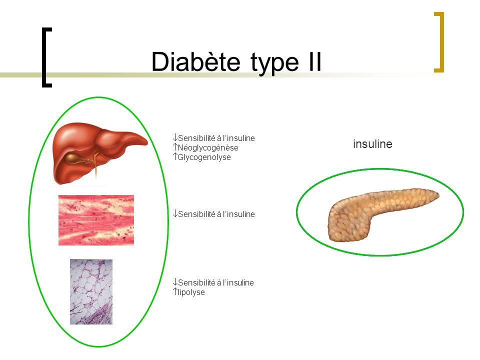 Sensibilité à linsuline Néoglycogénèse Glycogenolyse Sensibilité à linsuline lipolyse insuline Diabète type II