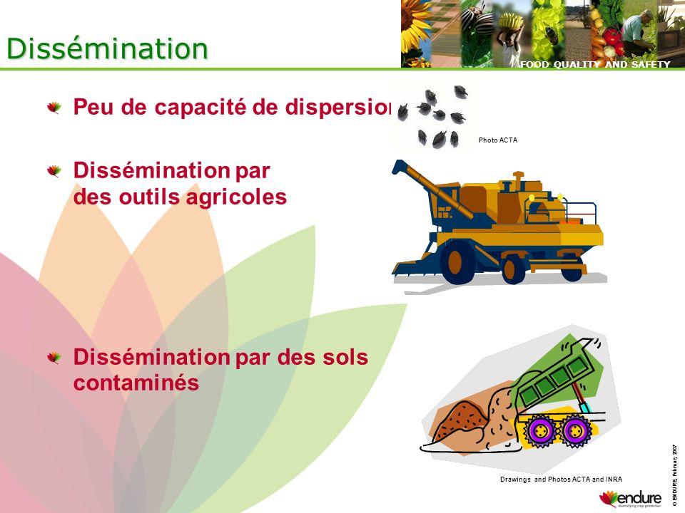 © ENDURE, February 2007 FOOD QUALITY AND SAFETY © ENDURE, February 2007 FOOD QUALITY AND SAFETY Dissémination Peu de capacité de dispersion Disséminat