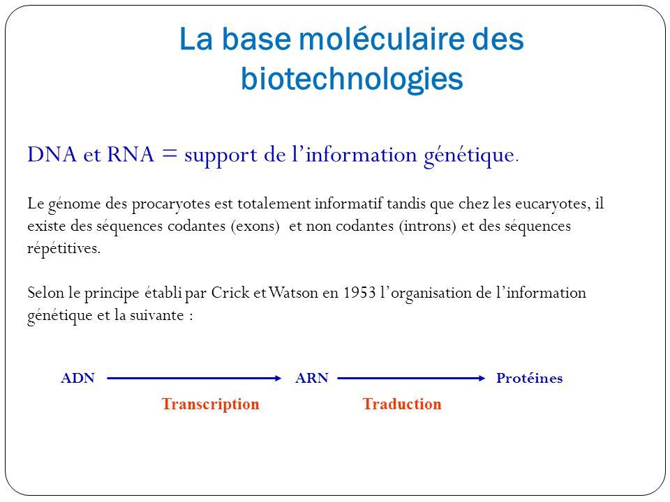 La base moléculaire des biotechnologies DNA et RNA = support de linformation génétique. Le génome des procaryotes est totalement informatif tandis que