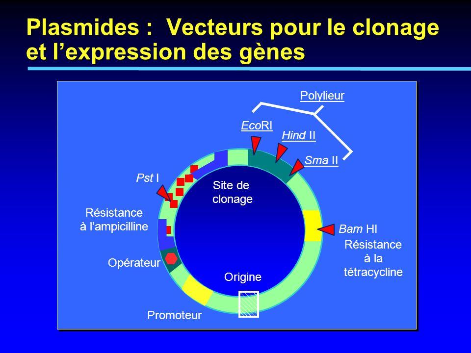 Pst I EcoRI Hind II Sma II Polylieur Site de clonage Opérateur Promoteur Origine Résistance à lampicilline Plasmides : Vecteurs pour le clonage et lex