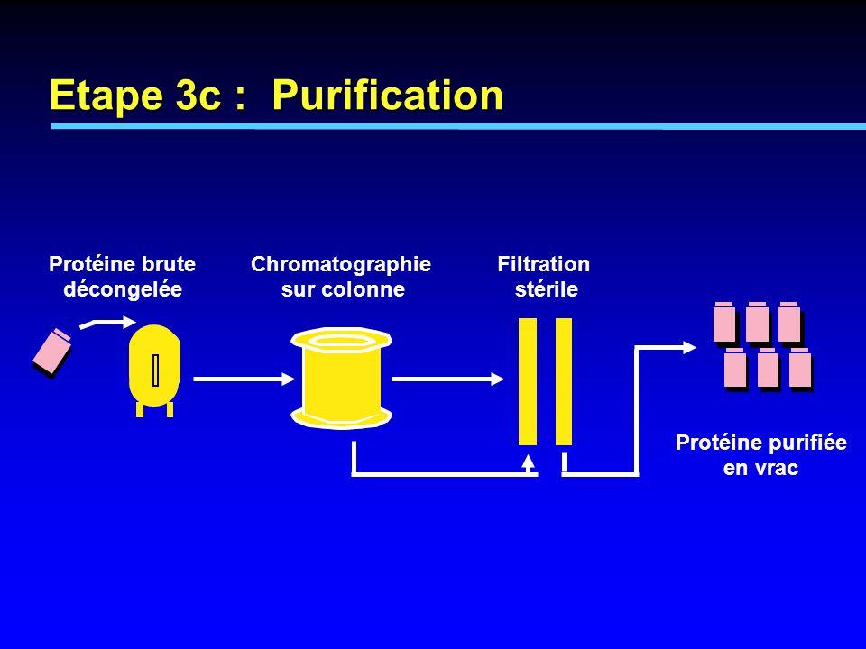 Chromatographie sur colonne Protéine brute décongelée Filtration stérile Protéine purifiée en vrac Etape 3c : Purification
