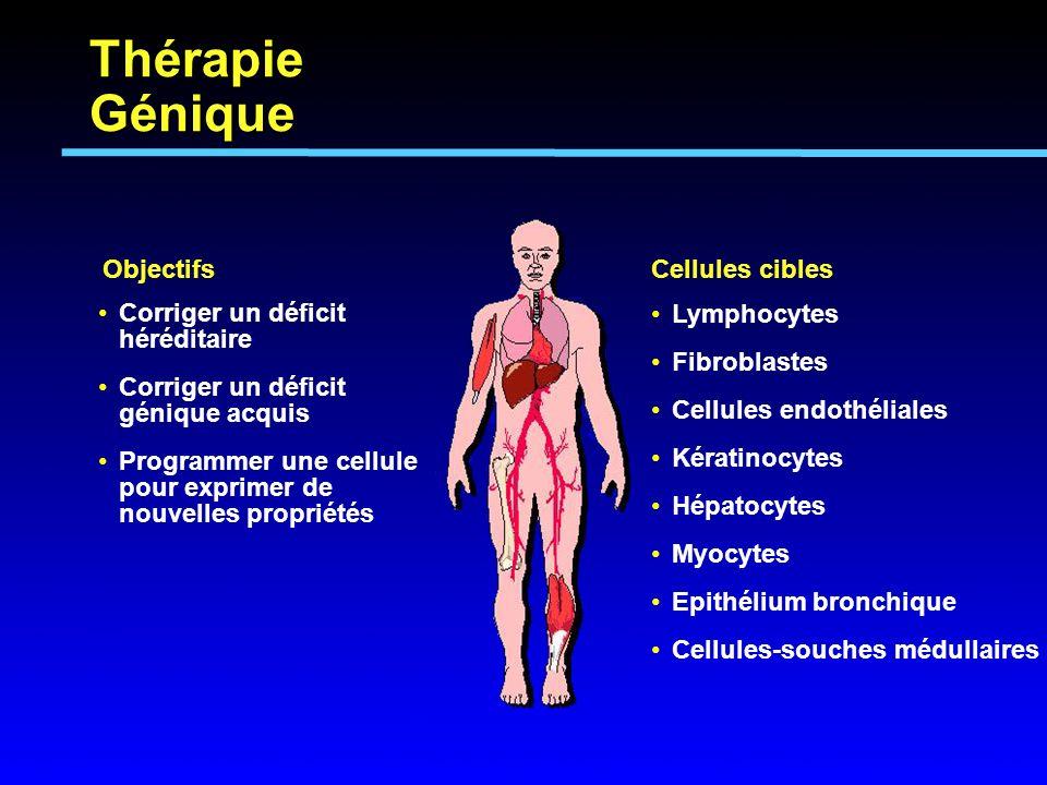 Corriger un déficit héréditaire Corriger un déficit génique acquis Programmer une cellule pour exprimer de nouvelles propriétés Objectifs Lymphocytes