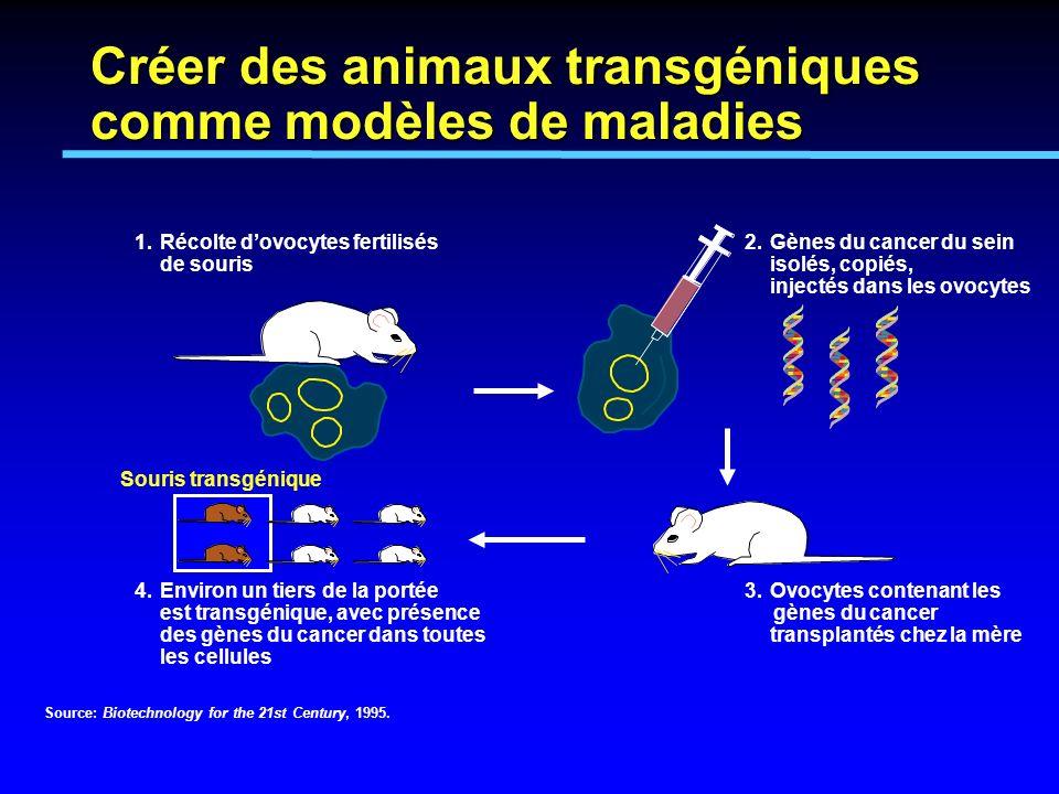 1.Récolte dovocytes fertilisés de souris 2.Gènes du cancer du sein isolés, copiés, injectés dans les ovocytes 3.Ovocytes contenant les gènes du cancer