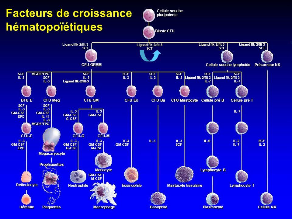 Facteurs de croissance hématopoïétiques Cellule souche pluripotente Blaste CFU Ligand flk-2/flt-3 SCF CFU-GEMM Cellule souche lymphoïde Précurseur NK