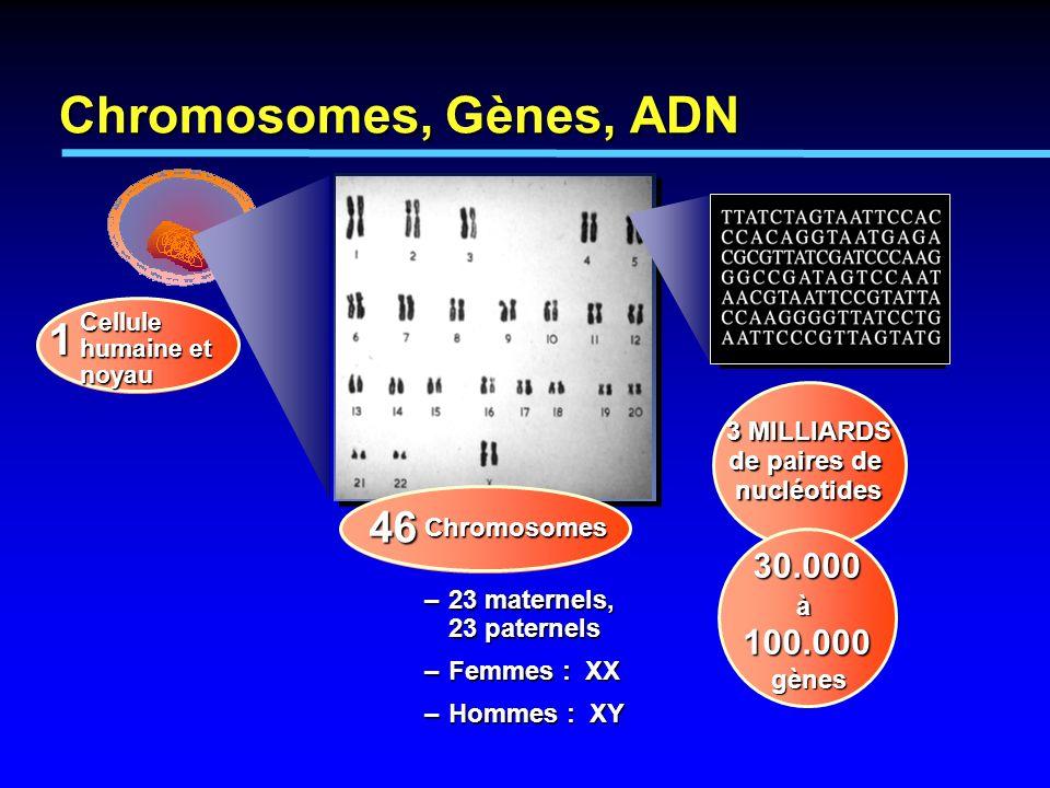 1 Cellule humaine et noyau Chromosomes –23 maternels, 23 paternels –Femmes : XX –Hommes : XY 46 3 MILLIARDS de paires de nucléotides 30.000 à 100.000