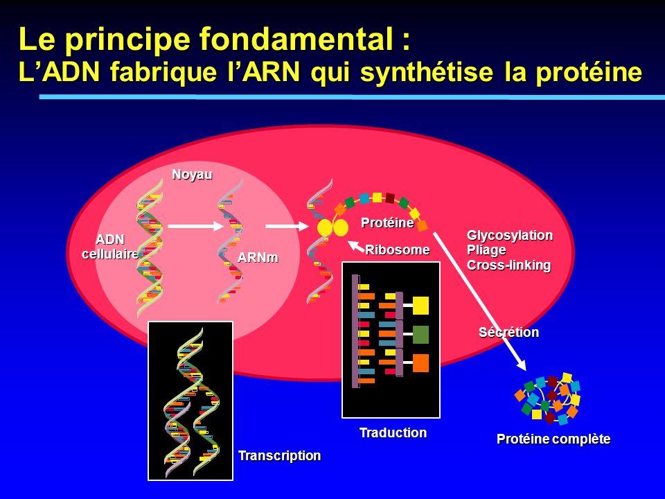 Banque cellulaire Flacon en T Flacon agitateur Fermenteur Flacons cylindriques dinoculat Etape 3a : Inoculation