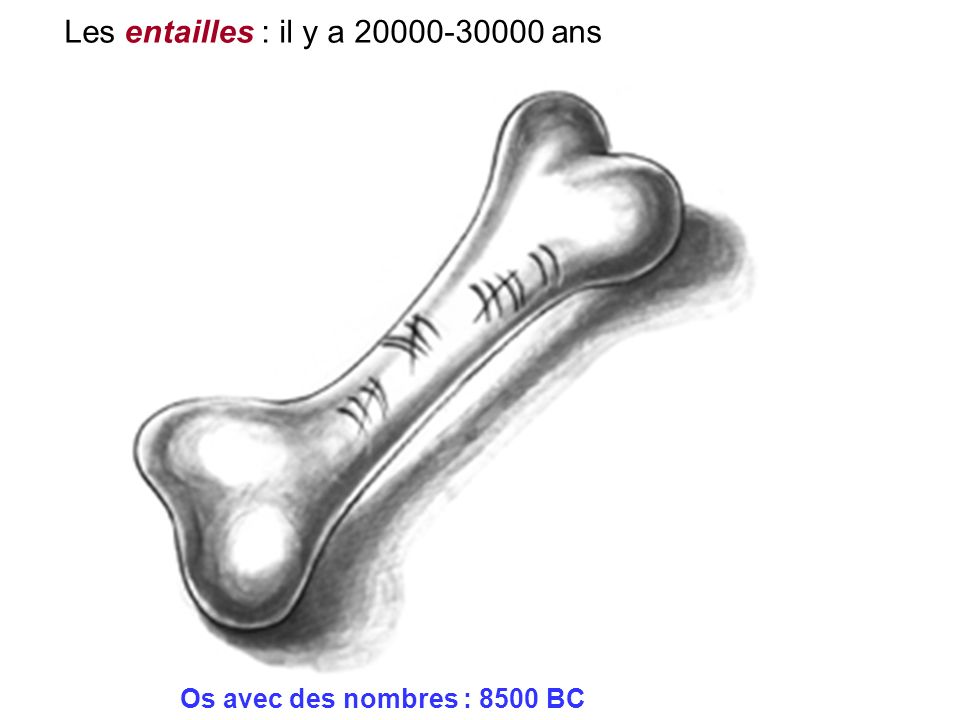 Os avec des nombres : 8500 BC Les entailles : il y a 20000-30000 ans