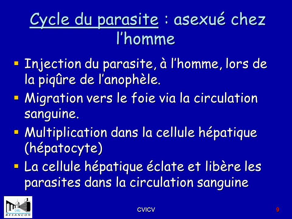 Cycle du parasite : asexué chez lhomme Cycle du parasite : asexué chez lhomme Injection du parasite, à lhomme, lors de la piqûre de lanophèle. Injecti