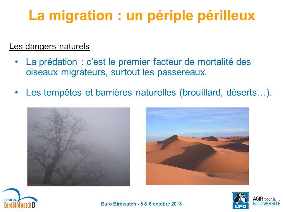 Euro Birdwatch - 5 & 6 octobre 2013 Les dangers naturels La prédation : cest le premier facteur de mortalité des oiseaux migrateurs, surtout les passe