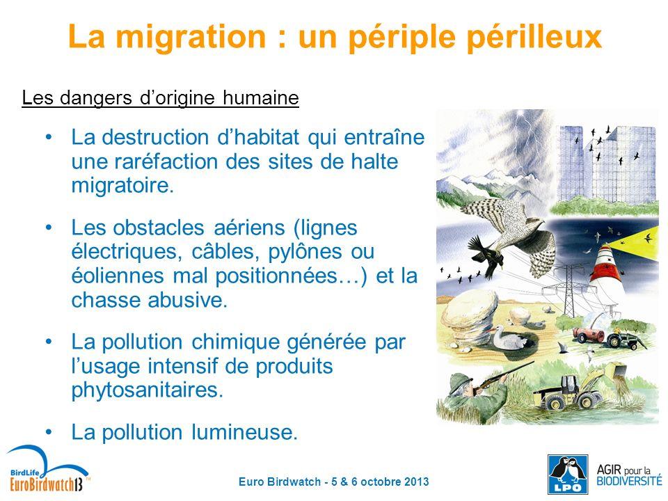 Euro Birdwatch - 5 & 6 octobre 2013 Les dangers dorigine humaine La destruction dhabitat qui entraîne une raréfaction des sites de halte migratoire. L