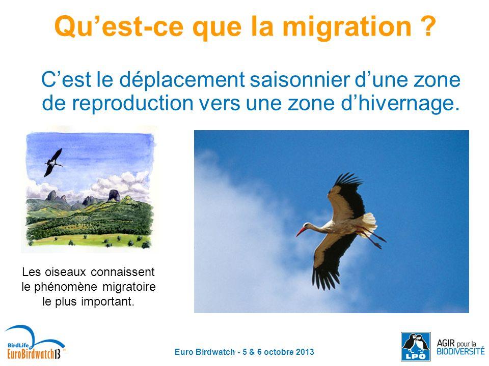 Euro Birdwatch - 5 & 6 octobre 2013 Quest-ce que la migration ? Cest le déplacement saisonnier dune zone de reproduction vers une zone dhivernage. Les